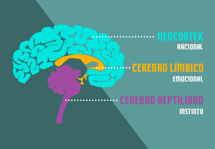 partes-cerebro-ventas